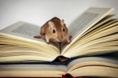 Concursante 02 Titulo : Raton de biblioteca